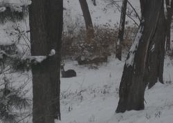 Deere Photo 1