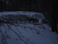 Deere Photo 3